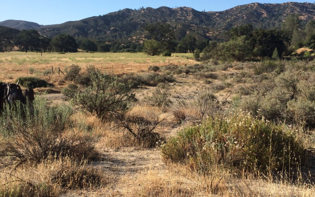 Pinnacles National Park Seeks Public Review of Environmental Assessment for Replacement of the East Side Entrance Station