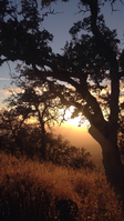 Register for a Night Hike: Wednesday Nights Starting Oct. 10